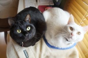 朝からかわいいにゃん's 白猫&黒猫